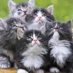 Таро Барочные Богемские Коты