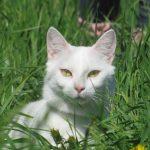 Таро Белых Котов